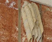 Mud dauber wasp Nest