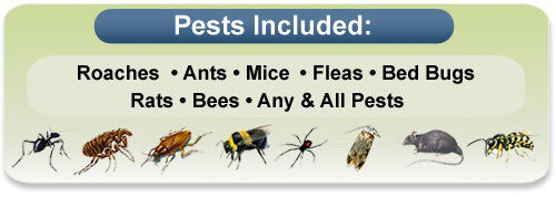 pest control nyc